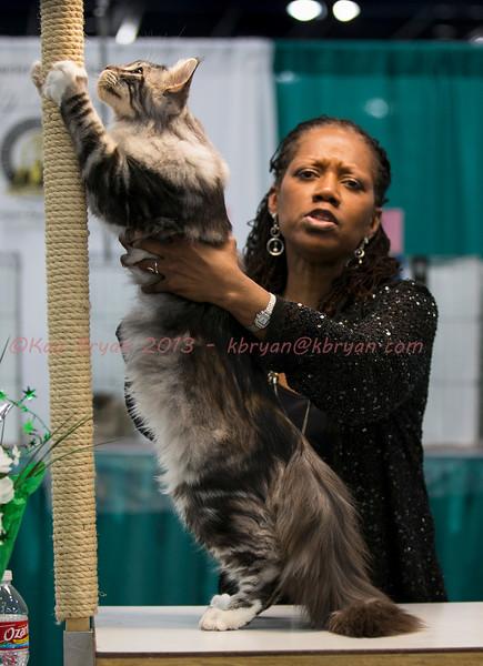 CatShow2014050_1.jpg