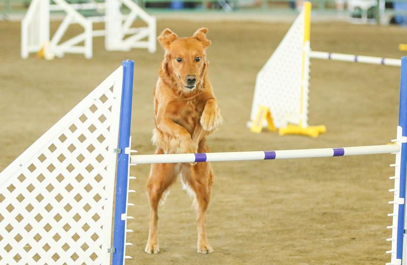 10-31-2015 Border Terrier-3043.jpg