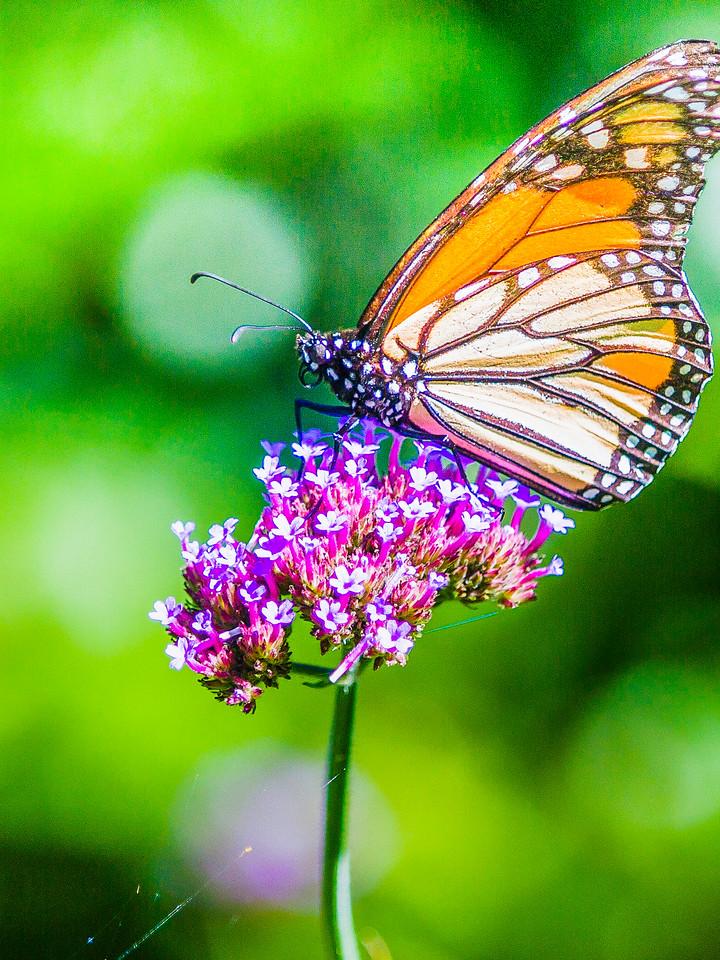 彩蝶,自由天使