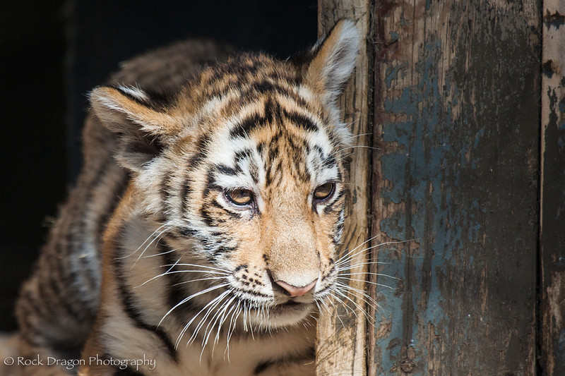 zoo_july_2012-27.jpg