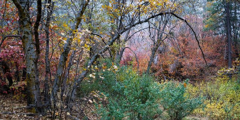 San_Berardino_Mountains_Fall_Color_Dogwoods_Panorama_DSC3291.jpg