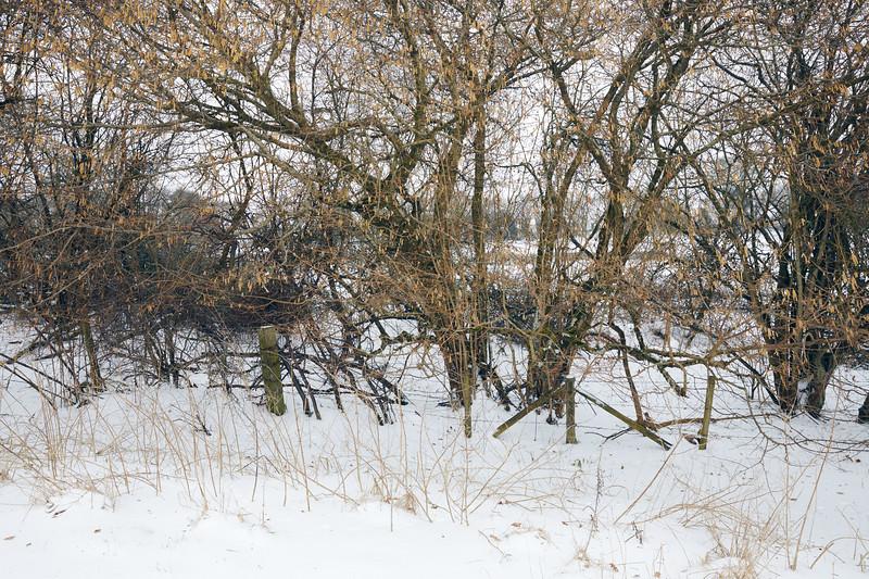 Snow Mar18 22.jpg