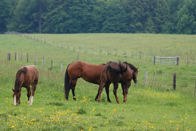 the 3 mares in pasture