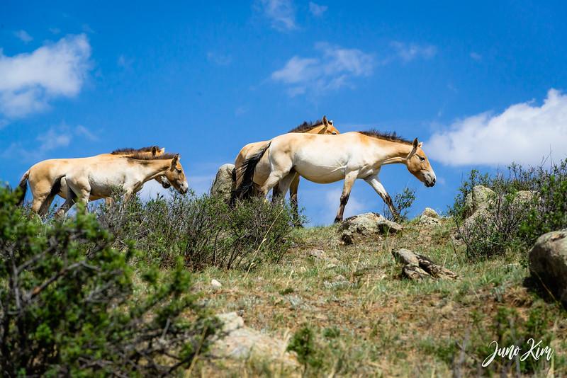 Kustei National Park__6109456-Juno Kim.jpg