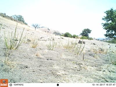 Wildlife cam 7/29/15-7/30/15