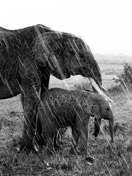 IMG_3625_elephants_in_the_rain.jpg