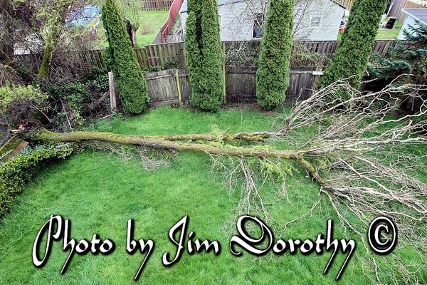 Integrity Tree Care