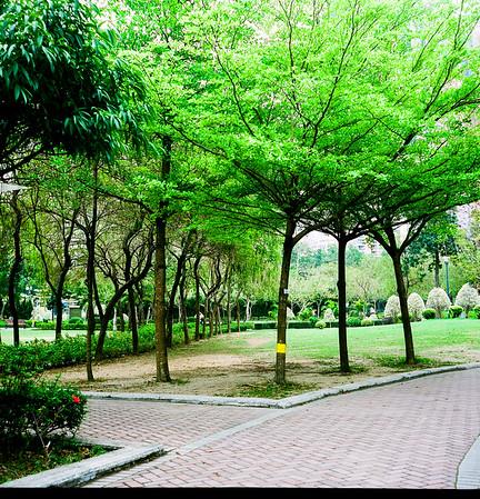 Nam Cheong Garden