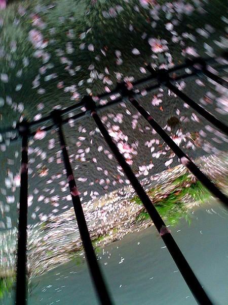 Dizzy+Blosssoms.jpg