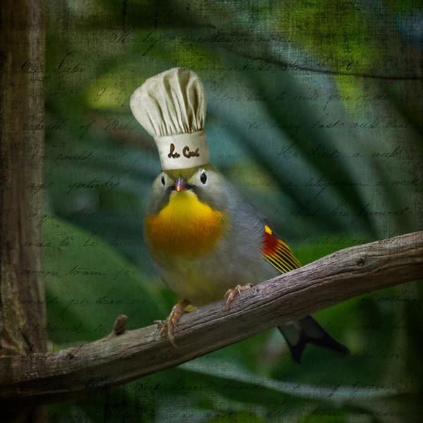 chefbird.jpg