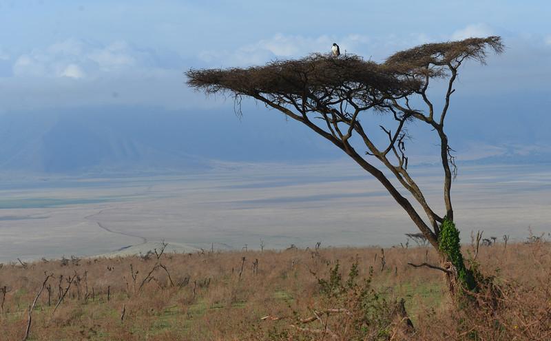 East Africa Safari 403.jpg