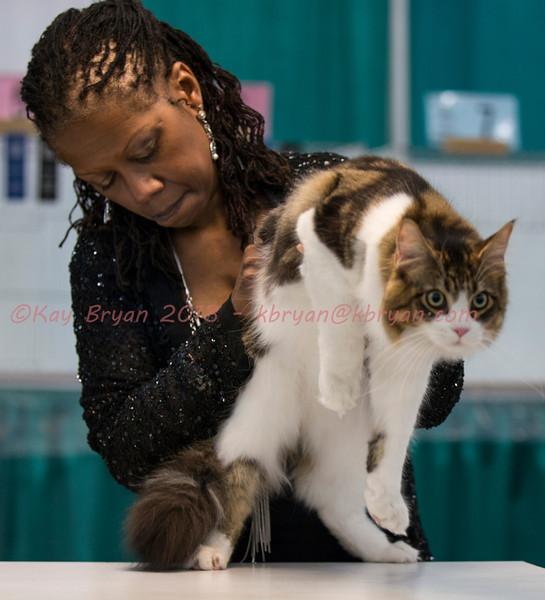CatShow2014041_1.jpg
