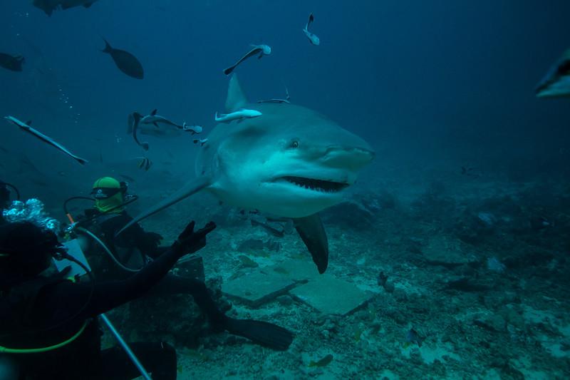 Aqua Trek Beqa Divers, Beqa Lagoon