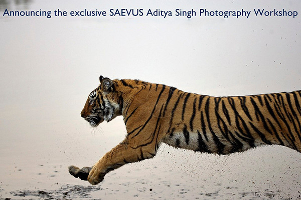 Saevus Aditya Sing wildlife photography workshop