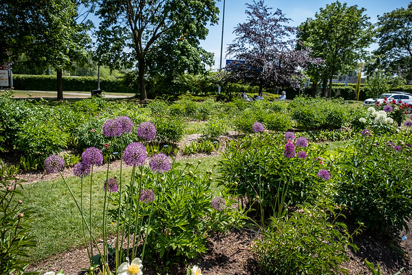 Oshawa Botanical Gardens 2021