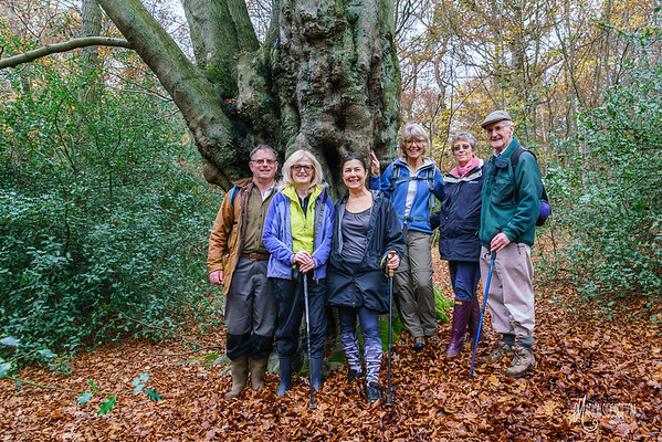 Forest Walking Groups