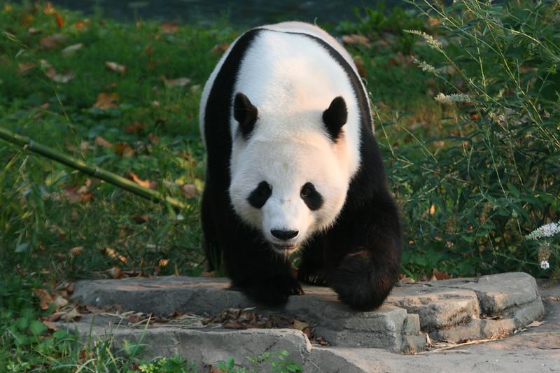Panda080407_0053.JPG