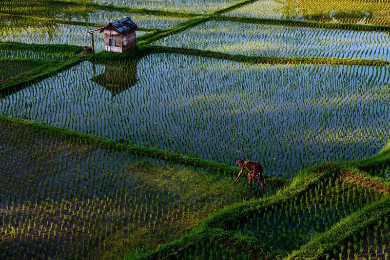 160220 - Bali - 3127.jpg