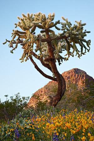Arizona Scenics