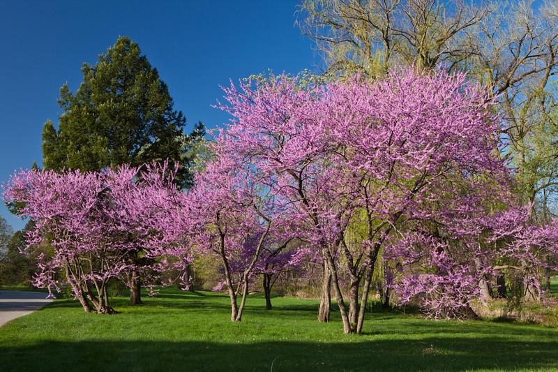 Spring12-1570.jpg