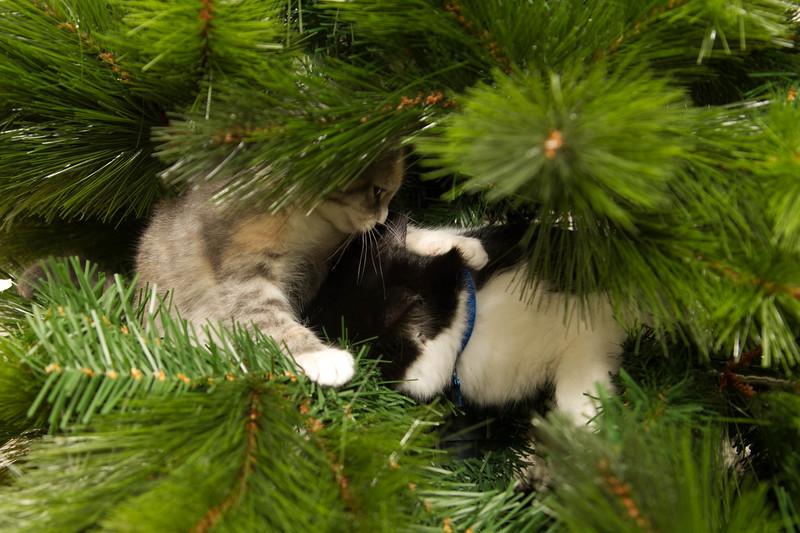 Christmas Day 2012-7091.jpg