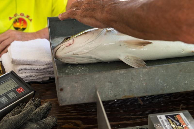 ACGFA Kingfish Day 1-0004.jpg