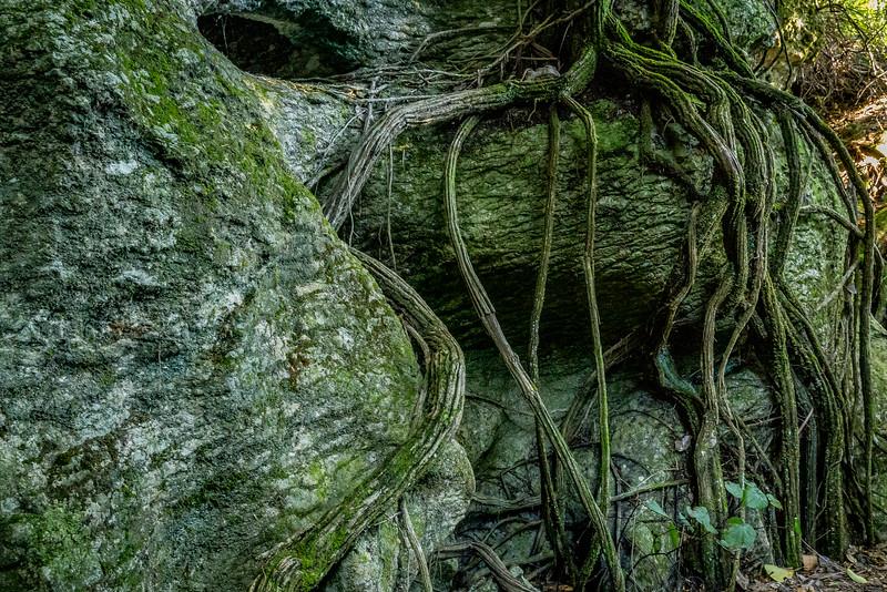 «The Grove» nahe Takaka