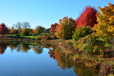 Chicago Botanic Gardens...Fall Colors