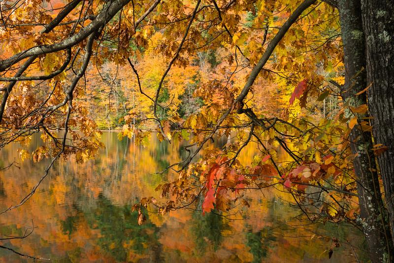 Vermont Fall 2019-13.jpg