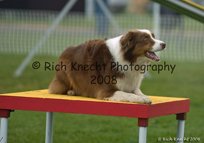 Dog Agility: Northbranch 2006