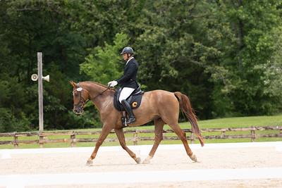 Horse 375