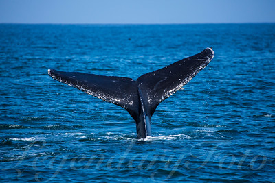 2015 May Whale Watching