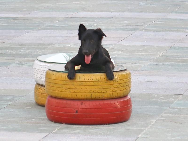 IMG_9109-resting-dog.jpg