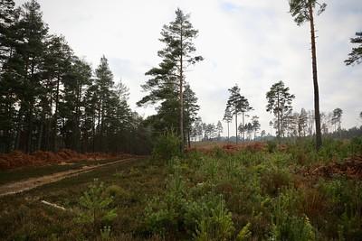 Swinley Wood with Klara