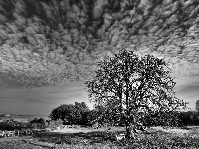 Mackerel sky b&w
