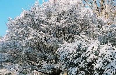 2008 Feb Valentine's Snow Day