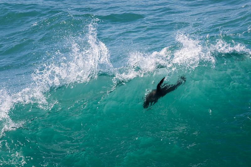 Seal Dive.jpg