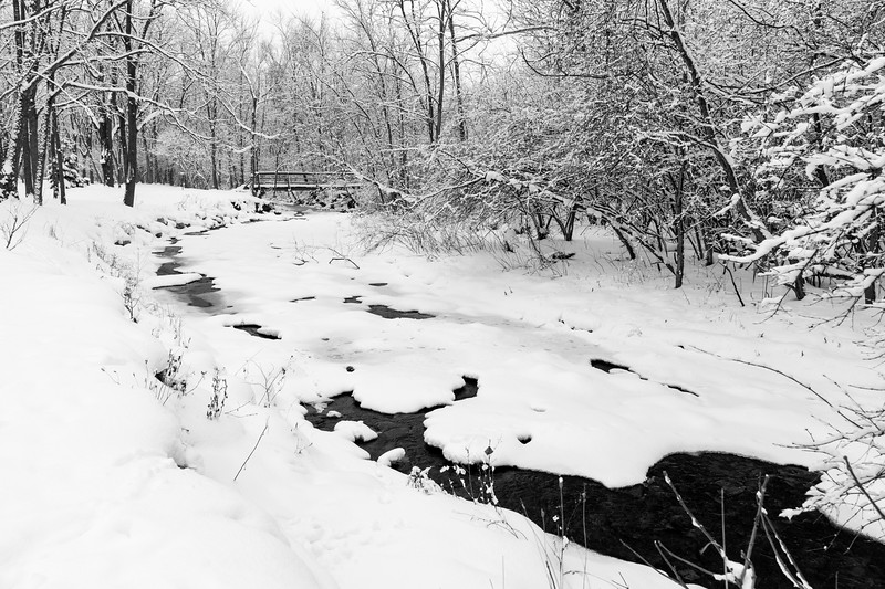February Snow, Roscoe Ewing Park, 2016
