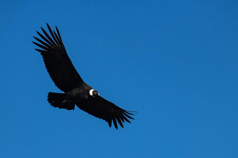 20190409__KET1574_Birds6736.jpg