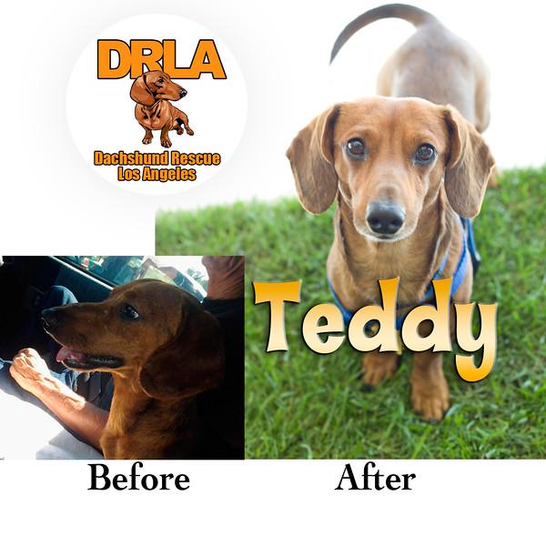 BA_Teddy.jpg