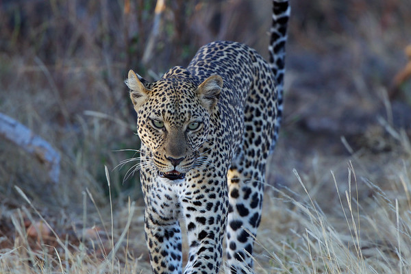 Images from Africa