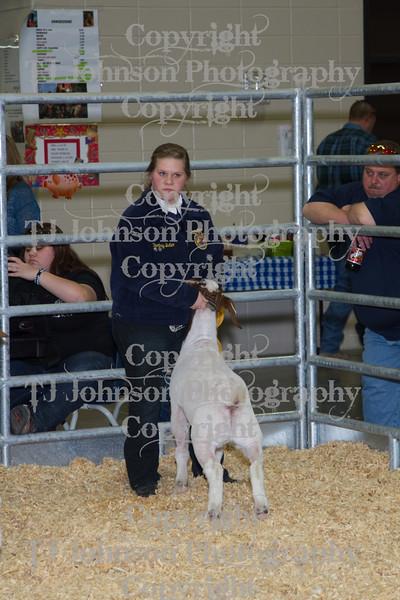 2013 Klein ISD Goat Show Class 4