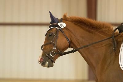 Horse 81