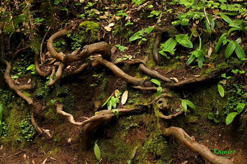 Muir Woods IMG_3916.jpg