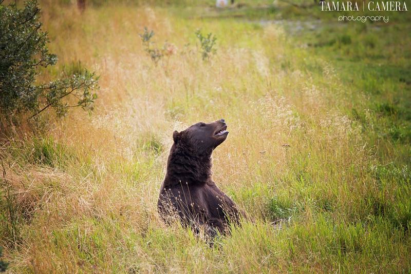 Bear2-2-2.jpg