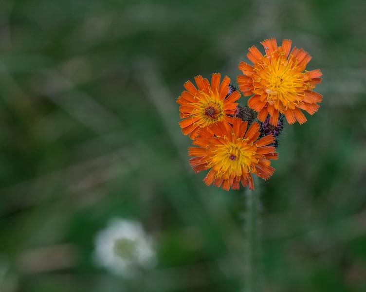 Flowers-38.jpg