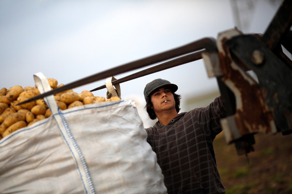 """. Day labourer Jorge Ibanez, 20, smokes as he helps load a sack filled with potatoes onto a truck while he harvests potatoes in the southern Spanish region of Cartagena, Murcia, June 7, 2013. Ibanez quit school at the age of 16 to help pay the bills at home and did various different jobs before going back to complete his secondary education. Recently, he decided to start working as a day labourer. \""""I know for sure this is not what I want to do for the rest of my life, but this is all I can find now,\"""" he says. The majority of day labourers in the region come from Morocco and Ecuador, and it can be rare to see Spanish labourers in the fields. Nevertheless, as Spain wrestles with economic crisis and youth unemployment levels above 50 percent, some young Spaniards are starting to consider the kinds of jobs mostly performed by immigrants during the boom years.  Picture taken June 7, 2013. REUTERS/Susana Vera"""