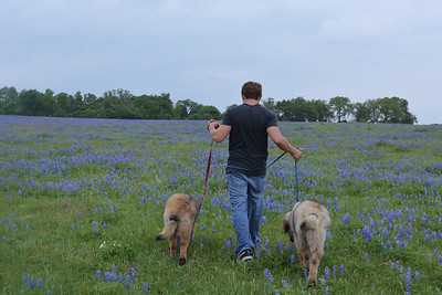 first bluebonnets