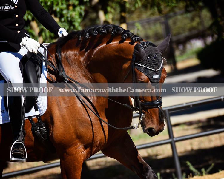 SVE 19 Hang On Oliver 4669.jpg