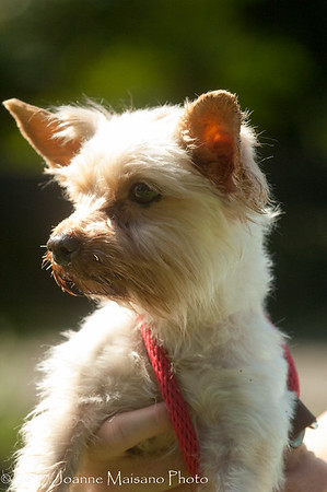 Middleburg Humane Foundation Dogs 9-8-17